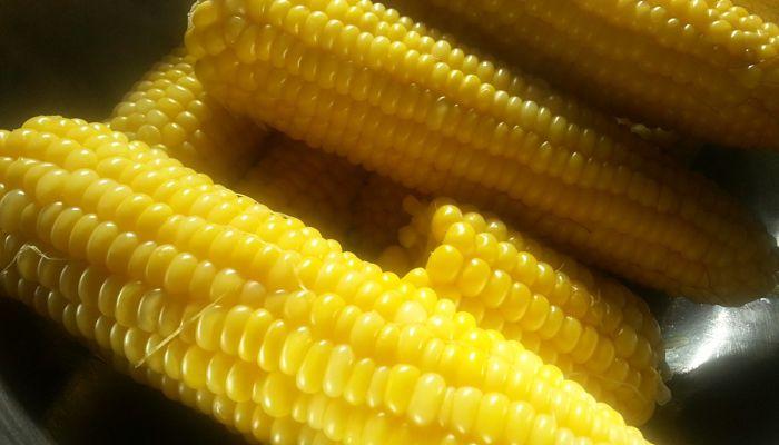 Cómo cultivar maíz