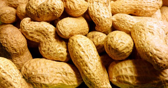 cómo cultivar cacahuates