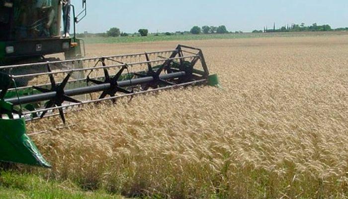 Aplicación de fertilizantes para el trigo
