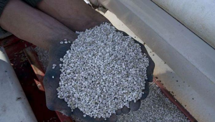Aplicación de fertilizantes para el trigo es necesaria