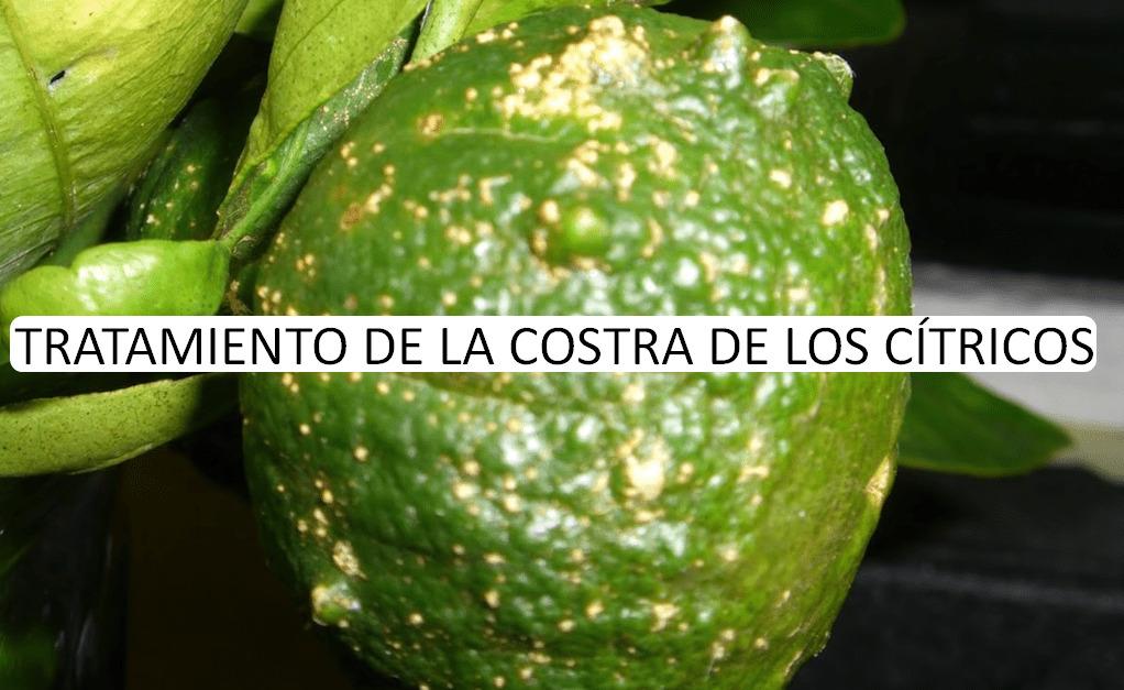 TRATAMIENTO DE LA COSTRA DE LOS CÍTRICOS
