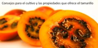 Consejos para el cultivo y las propiedades que ofrece el tamarillo.